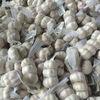fatory jinxiang white garlic from China garlic