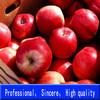 Manufacturer of High Quality Apple Cider Vinegar Powder 5%