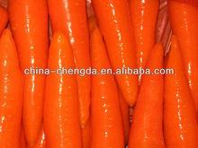 2013 new fresh carrot