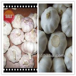 china cheap garlic,natural garlic, price of garlic