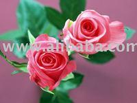 Pure Rose Essential Oil / indian Rose Oil / Rose Oil