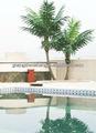Produttore professionale! Re artificiale albero di cocco con il prezzo ragionevole