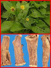 GMP&KOSHER Manufacturer Supply Inula racemosa P.E.