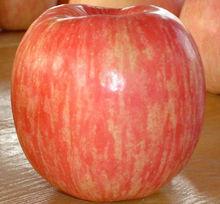 High quality fresh fuji apples
