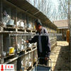double rabbit cage(professional manufacturer)