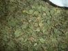 Centella asiatica /Gotu Kola; Asiatic pennywort