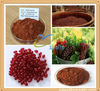 Natural antioxidants organic grape seed extract powder raw material for health care medicine