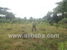 Investors Wanted, Shares in Sandalwood Plantation