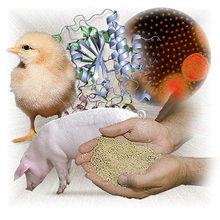 SUKAFEED-B.Lat Aquatic specific feed bacteria bacillus laterosporus