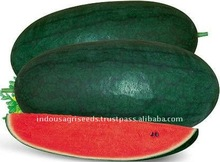 Indian water melon Seeds