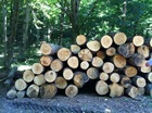 Oak White Round Wood Logs