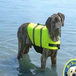 Pet dog safety suit