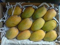 Fresh keshar Mango