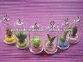 pet planta mini