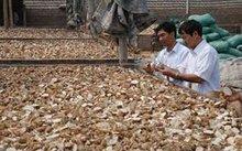 Oferta bien seca yuca chips, Precio barato