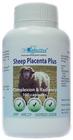 Sheep Placenta P