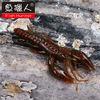 fishing lure/105mm 11.7g/ soft bait wholesale