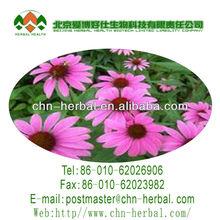 Polyphenols 4% UV Echinacea extract