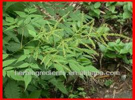 High Quality Natural Cimicifuga racemosa p.e