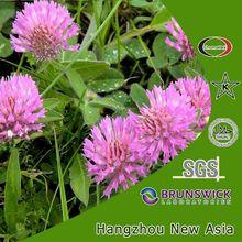 Red Clover Extract, Trifolium pratense, Isoflavone 8%
