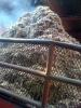 Biomass Pellet Fuel