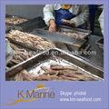 pescados y mariscos en vivo para la venta de atún lomo de peces bonito
