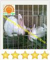 çin tedarikçiler Otomatik tavşan yetiştirme kafesi