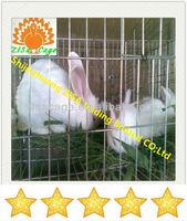 3tiers x4cells Automatic rabbit cage farm
