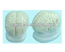 Cerebro anatómico modelo 3 piezas, Cerebro humano modelo de enseñanza