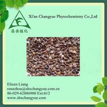 Natural Plant Buckwheat extract/Wild buckwheat rhizome extract/Tartary buckwheat extract