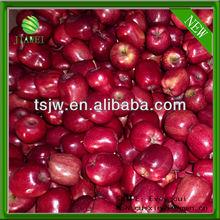 NEW fresh red apple price
