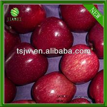 NEW fresh apple price