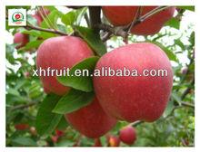 New crops fresh fuji apples