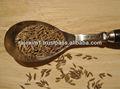 sementes de cominho com preço razoável