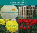 las plantas daminozida planta inhibidor del crecimiento b9