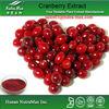 Cranberry Fruit Extract Anthocyanidins, Proanthocyanidins