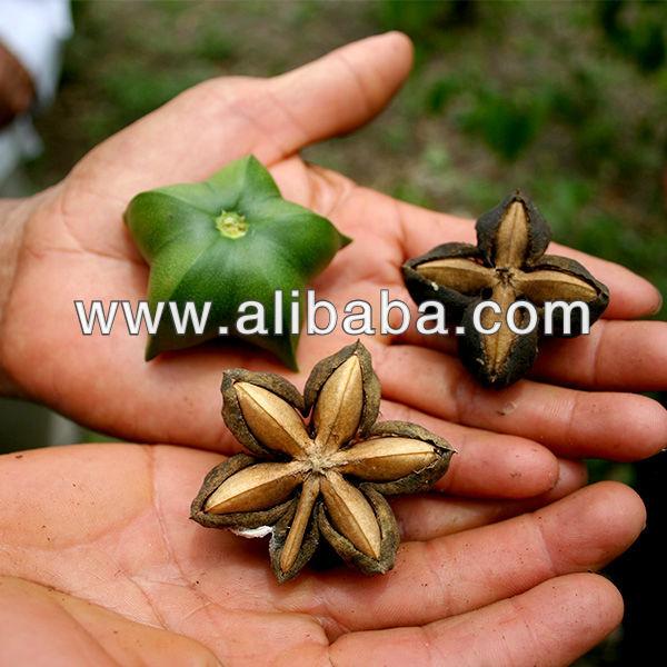 Sacha Inchi Protein Powder(organic)