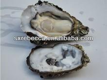 estratto di ostriche