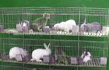 welded rabbit cage wire mesh / rabbit cage