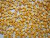 Yellow corn - Indian maize