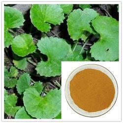 100% Natural Centella Asiatica Extract Powder Triterpenes for skin care