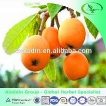 Loquat leaf Extract with Ursolic Acid
