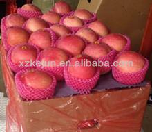 Best fresh fuji apple