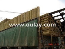 Natural dry bamboo canes for SUPPORTING