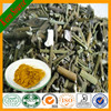 100% Natural Plant Extract Chinese Taxillus Herb Extract