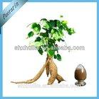 100% Pure Kudzu Root Extract Powder Puerarin 99%