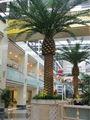 2014 vendita calda artificiale canarino data di palma decorare su progetto di paesaggio indoor mini albero di palma da dattero