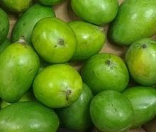 Fresh Vegetable Green Mango Exporter in India