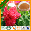 Pelargonium Graveolens Extract/Pelargonium Extract/Pelargonium Sidoides Extract