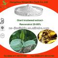 natural gigante knotweed extracto
